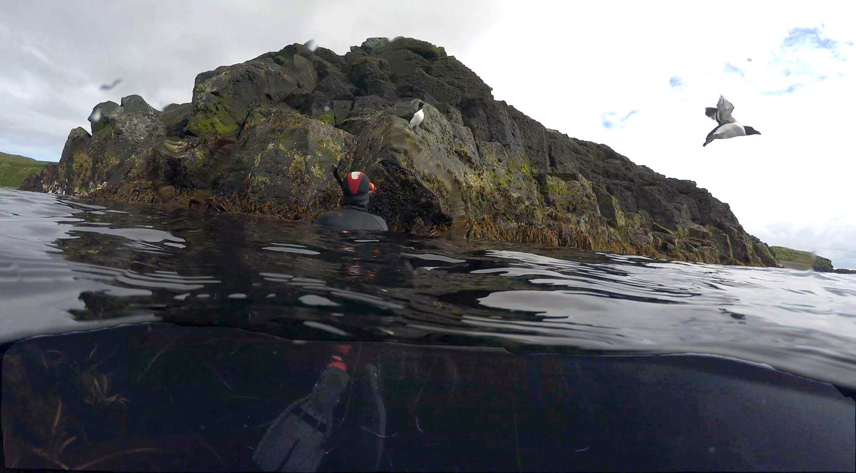 Arctic Snorkeling