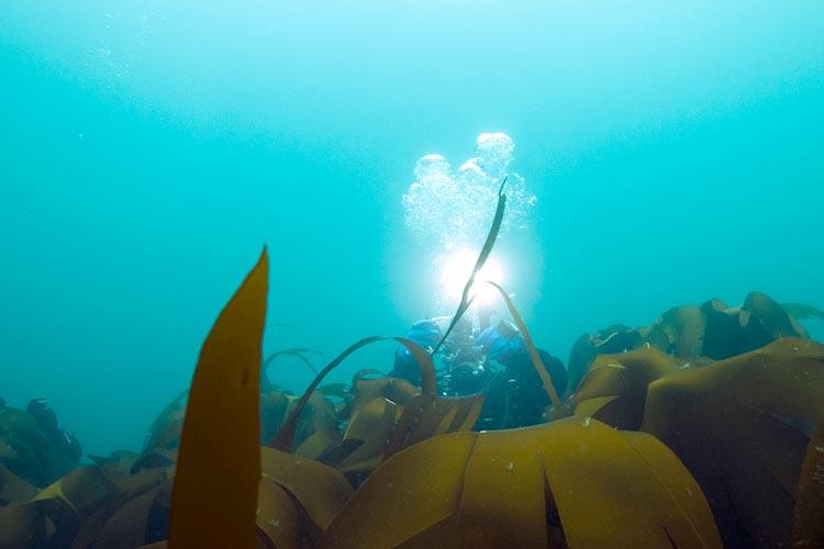 diving north iceland grimsey