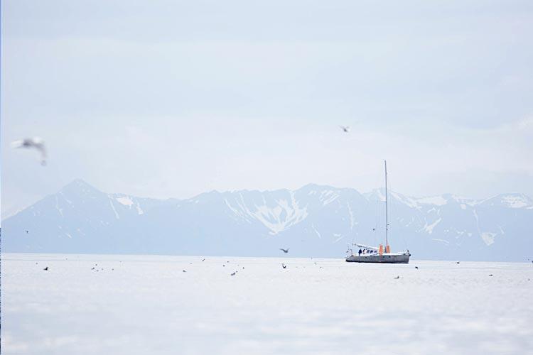 Arctic Gourmet Sea Angling